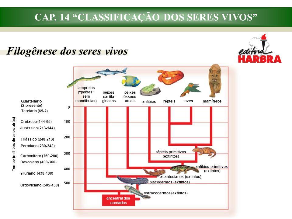 """CAP. 14 """"CLASSIFICAÇÃO DOS SERES VIVOS"""" Filogênese dos seres vivos Tempo (milhões de anos atrás) Ordoviciano (505-438) Quartenário (2-presente) Terciá"""