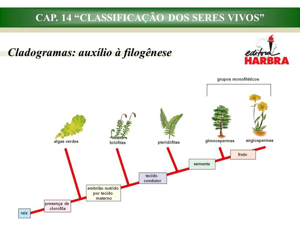 """CAP. 14 """"CLASSIFICAÇÃO DOS SERES VIVOS"""" Cladogramas: auxílio à filogênese grupos monofiléticos raiz presença de clorofila embrião nutrido por tecido m"""