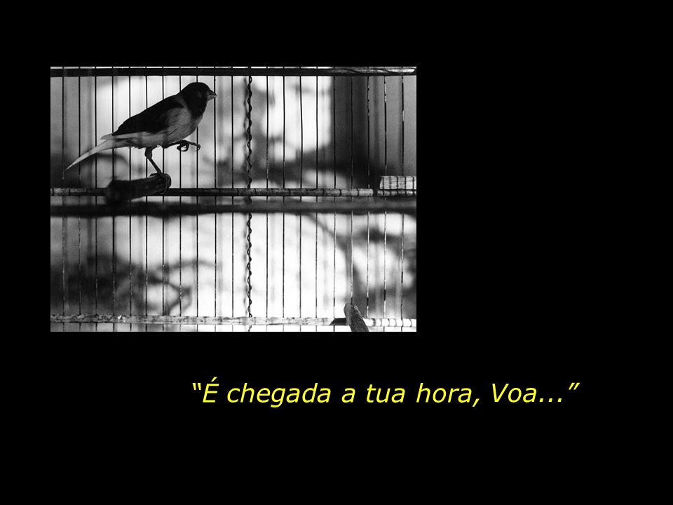 Chega o dia em que a Mãe Amorosa abre a porta da gaiola e diz para a ave do espírito: