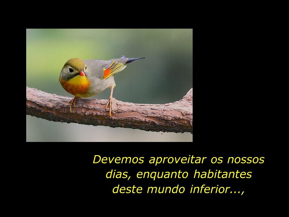 No dia em que a gaiola do nosso corpo fenecer, estaremos aptos a voar com as asas do nosso espírito