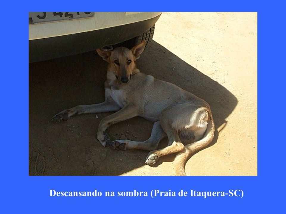 Descansando na sombra (Praia de Itaquera-SC)