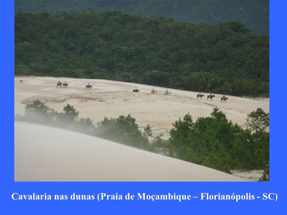 Cavalaria nas dunas (Praia de Moçambique – Florianópolis - SC)