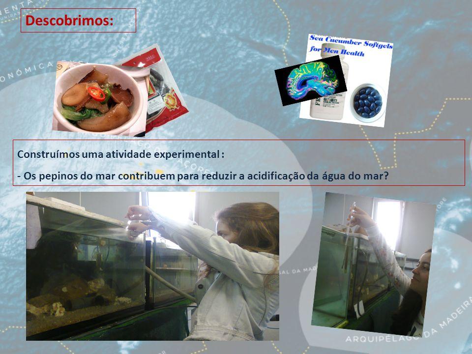 Descobrimos: Construímos uma atividade experimental : - Os pepinos do mar contribuem para reduzir a acidificação da água do mar