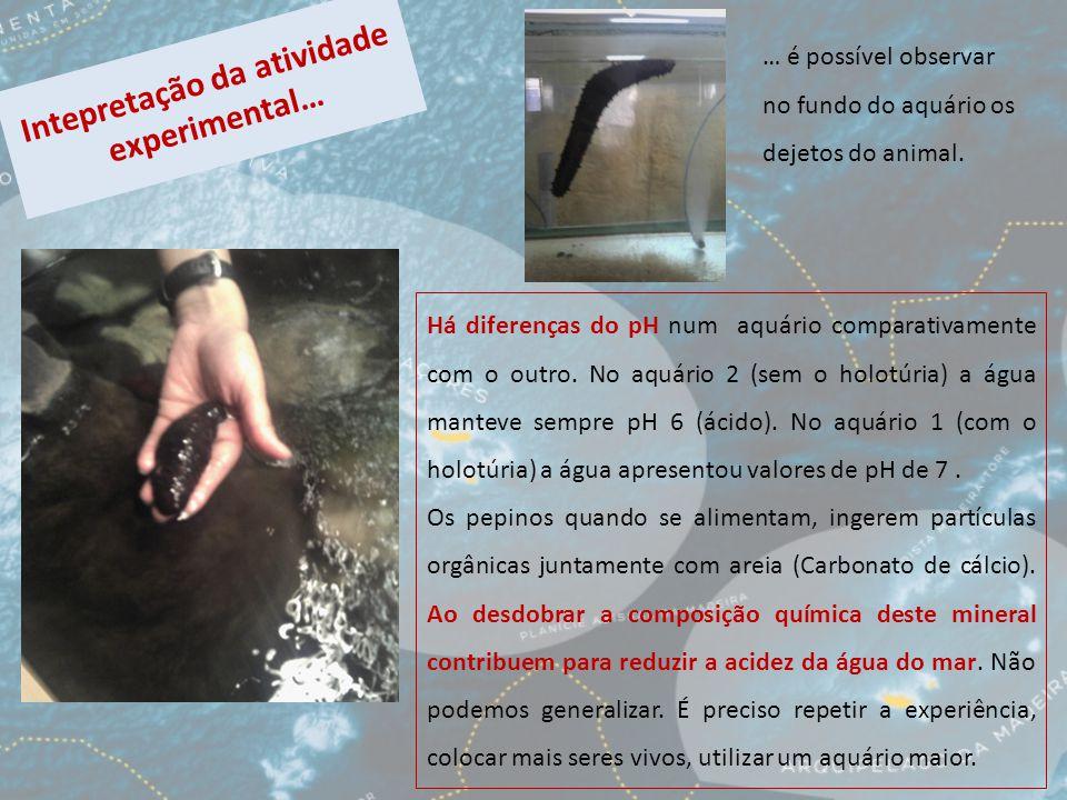 Intepretação da atividade experimental… Há diferenças do pH num aquário comparativamente com o outro.