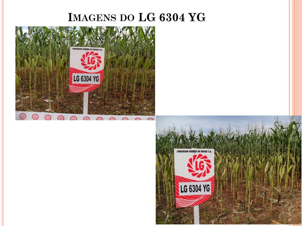 I MAGENS DO LG 6304 YG