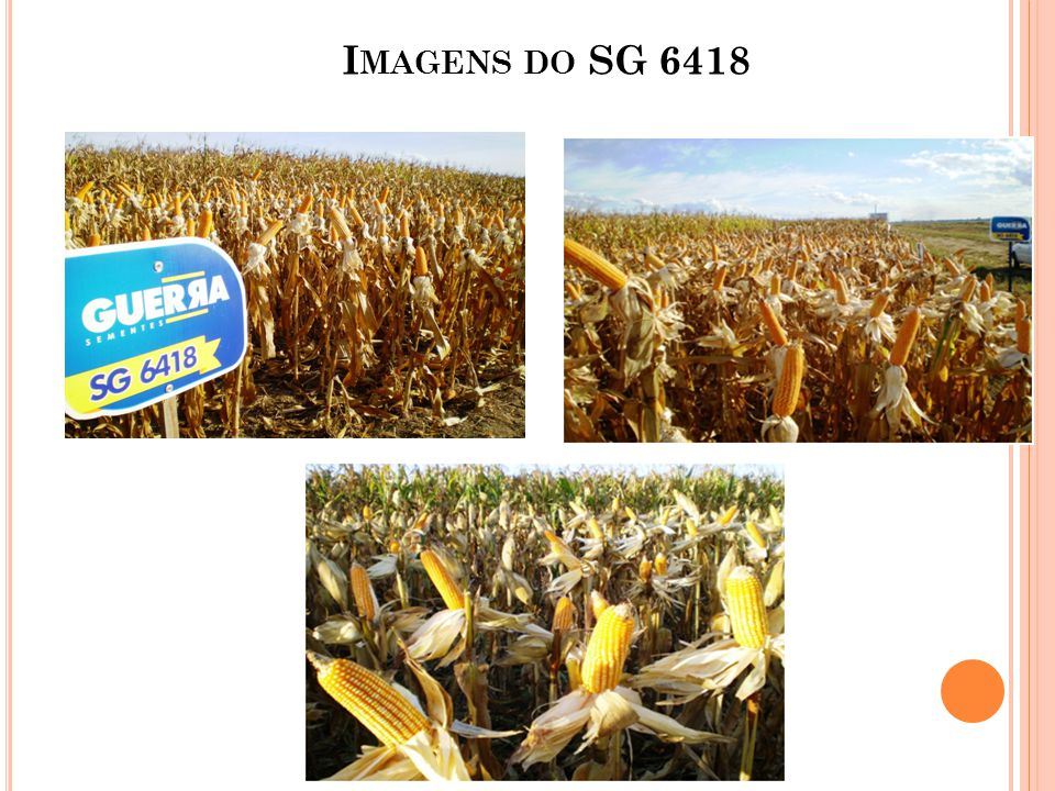 I MAGENS DO SG 6418