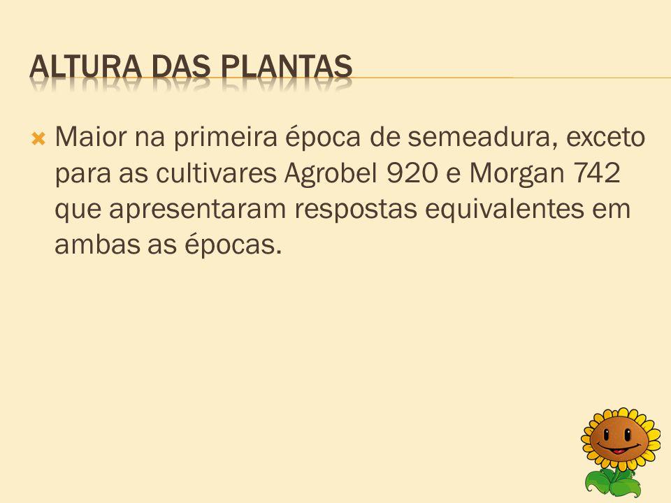  Maior na primeira época de semeadura, exceto para as cultivares Agrobel 920 e Morgan 742 que apresentaram respostas equivalentes em ambas as épocas.