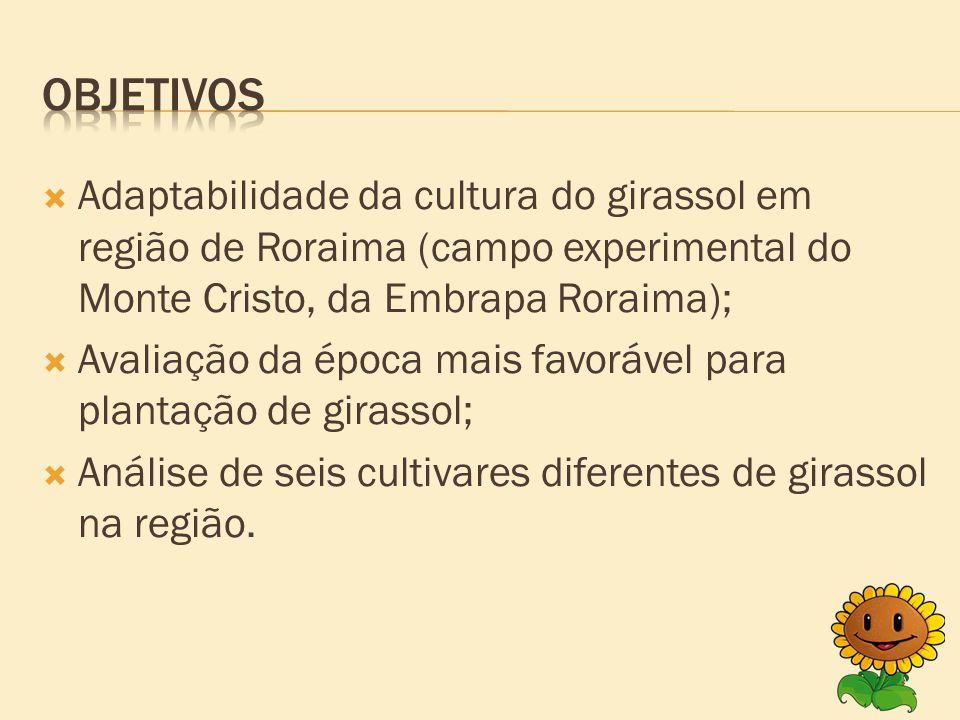  Adaptabilidade da cultura do girassol em região de Roraima (campo experimental do Monte Cristo, da Embrapa Roraima);  Avaliação da época mais favorável para plantação de girassol;  Análise de seis cultivares diferentes de girassol na região.