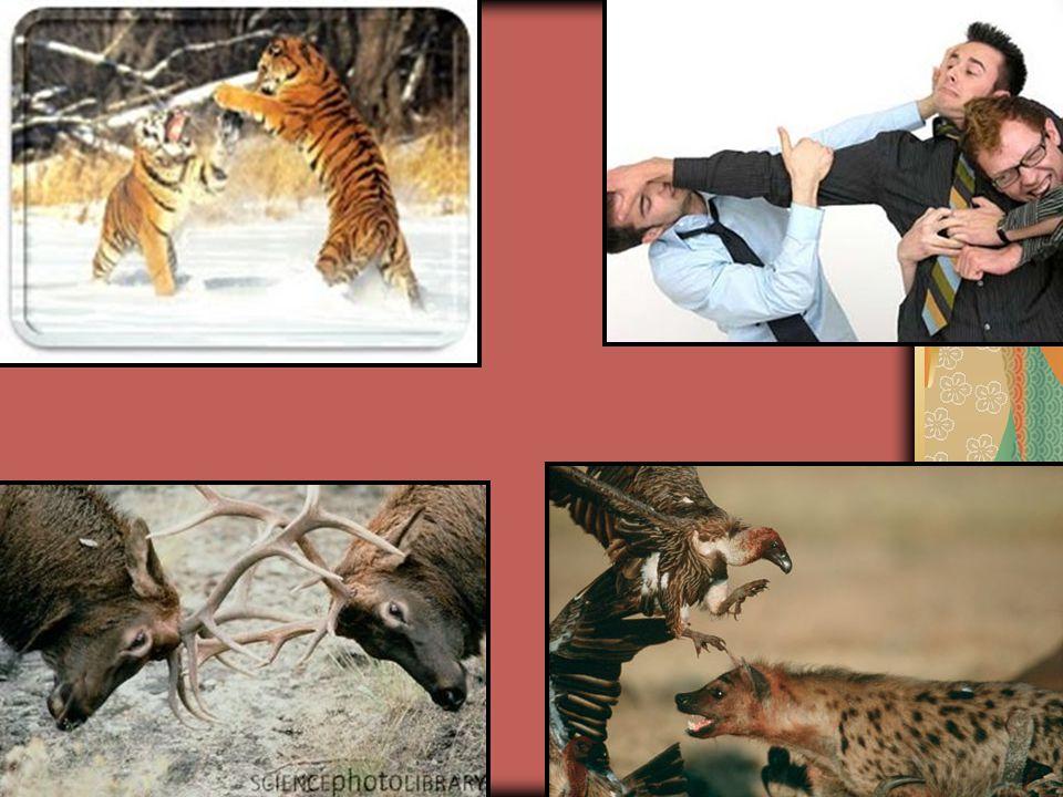 Pode ocorrer entre indivíduos da mesma espécie ou espécie diferente. Ocorre pela disputa de alimento, luz, água, espaço físico, fêmea.... Relações Des