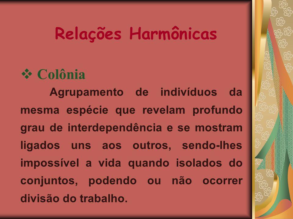 RELAÇÕES ECOLÓGICAS Relações Harmônicas: este tipo de relação ecológica traz benefício para um ou ambos os indivíduos envolvidos. Relações Desarmônica