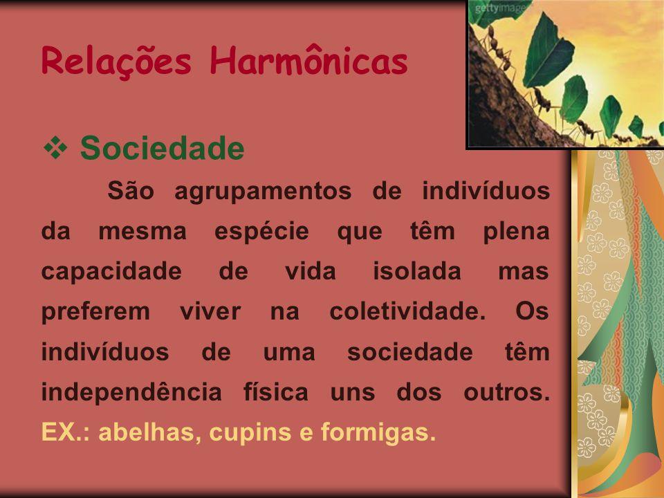 Caravela-portuguesa Corais