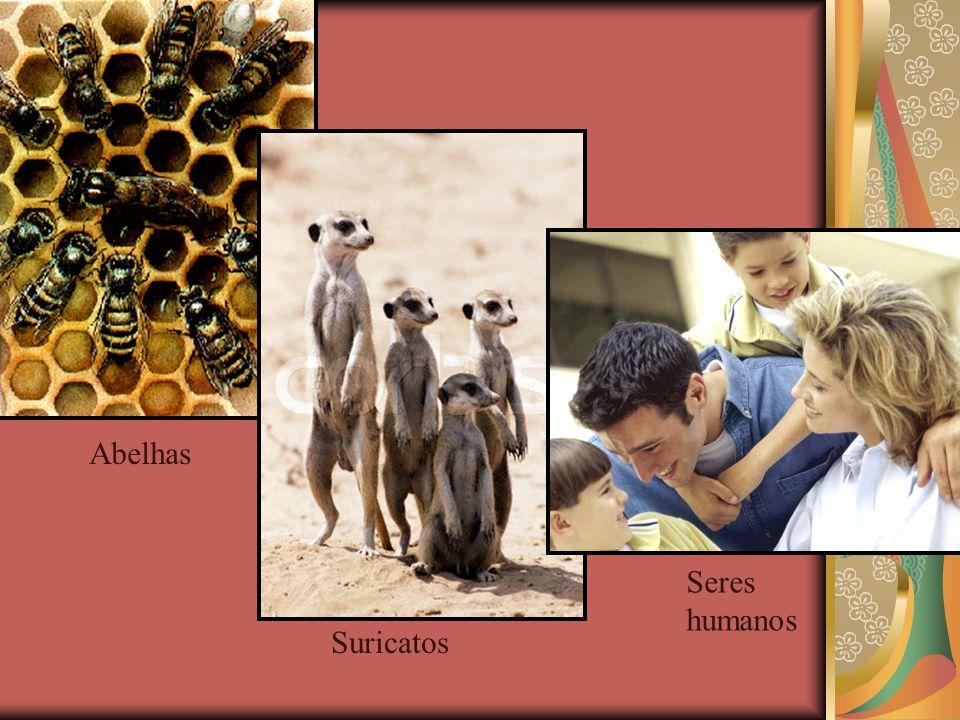  Sociedade São agrupamentos de indivíduos da mesma espécie que têm plena capacidade de vida isolada mas preferem viver na coletividade. Os indivíduos