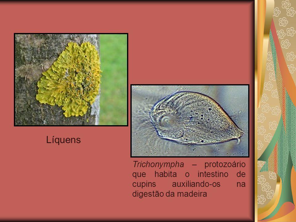  Mutualismo Associação na qual duas espécies envolvidas são beneficiadas, porém, cada espécie só consegue viver na presença da outra, associação perm