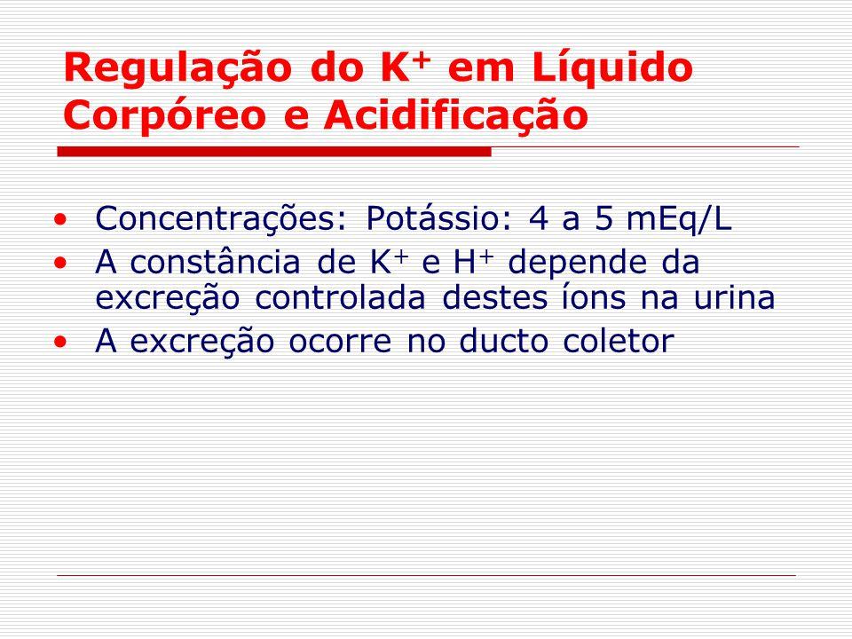 Regulação do K + em Líquido Corpóreo e Acidificação Concentrações: Potássio: 4 a 5 mEq/L A constância de K + e H + depende da excreção controlada dest
