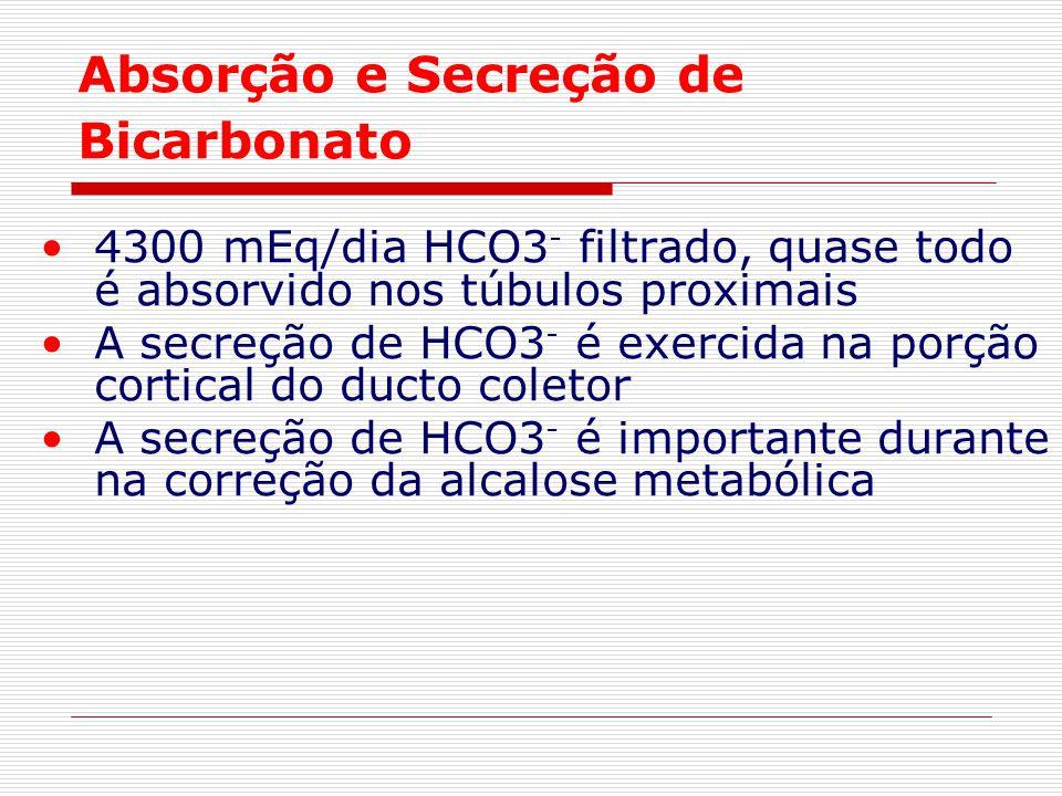 Absorção e Secreção de Bicarbonato 4300 mEq/dia HCO3 - filtrado, quase todo é absorvido nos túbulos proximais A secreção de HCO3 - é exercida na porçã