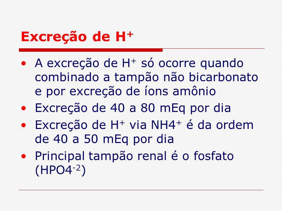 Excreção de H + A excreção de H + só ocorre quando combinado a tampão não bicarbonato e por excreção de íons amônio Excreção de 40 a 80 mEq por dia Ex