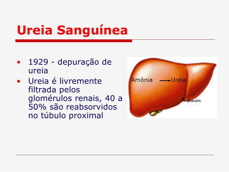 Ureia Sanguínea 1929 - depuração de ureia Ureia é livremente filtrada pelos glomérulos renais, 40 a 50% são reabsorvidos no túbulo proximal Amônia Uré