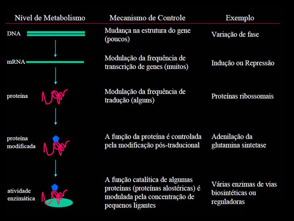 Sequências e moléculas reguladoras Sequências reguladoras: sequências de DNA, localizadas em regiões não codificantes Moléculas reguladoras: geralmente proteínas, que interagem com as sequências reguladoras Acionamento ou repressão da maquinaria transcricional Tipos e quantidades de produtos