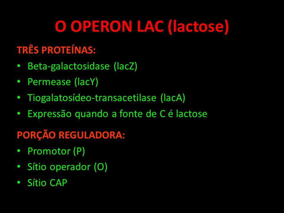 O OPERON LAC (lactose) TRÊS PROTEÍNAS: Beta-galactosidase (lacZ) Permease (lacY) Tiogalatosídeo-transacetilase (lacA) Expressão quando a fonte de C é