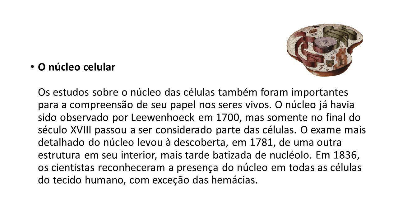 O núcleo celular Os estudos sobre o núcleo das células também foram importantes para a compreensão de seu papel nos seres vivos. O núcleo já havia sid