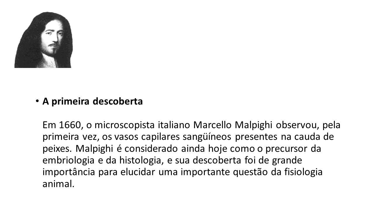 A primeira descoberta Em 1660, o microscopista italiano Marcello Malpighi observou, pela primeira vez, os vasos capilares sangüíneos presentes na caud
