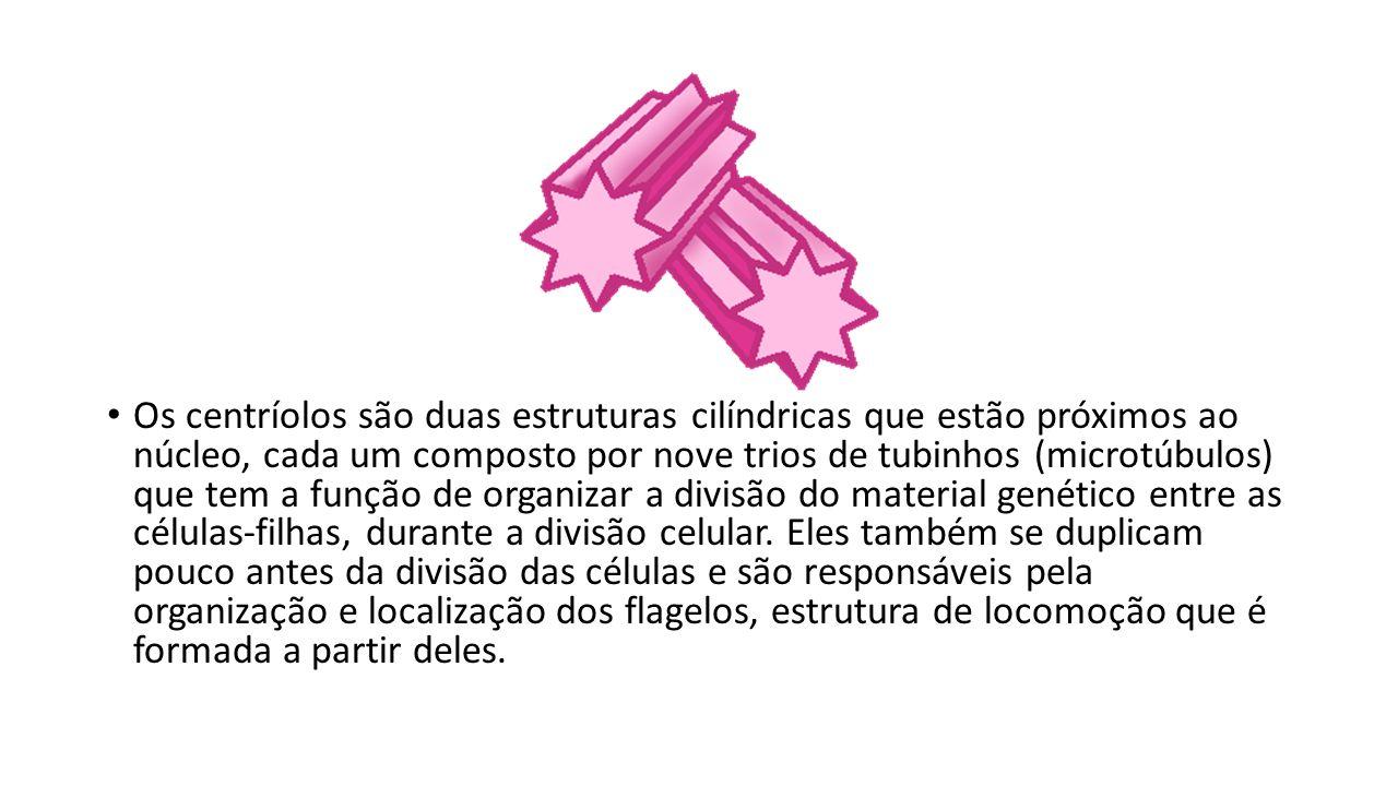 Os centríolos são duas estruturas cilíndricas que estão próximos ao núcleo, cada um composto por nove trios de tubinhos (microtúbulos) que tem a funçã