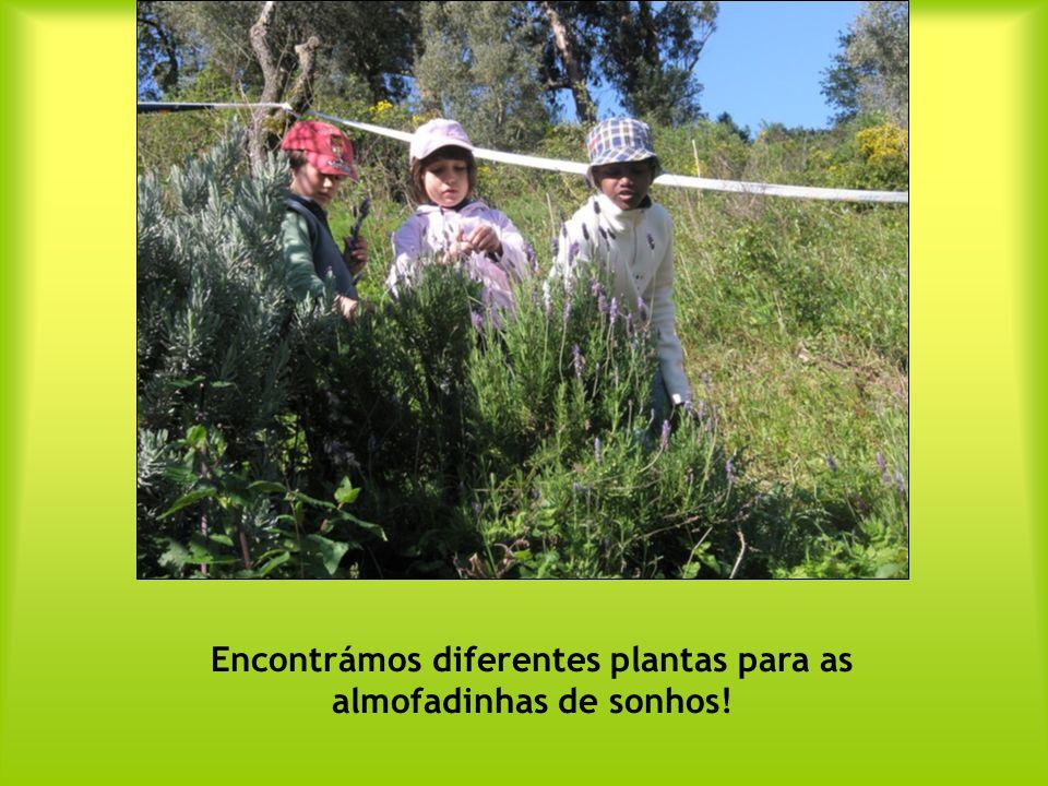 Encontrámos diferentes plantas para as almofadinhas de sonhos!