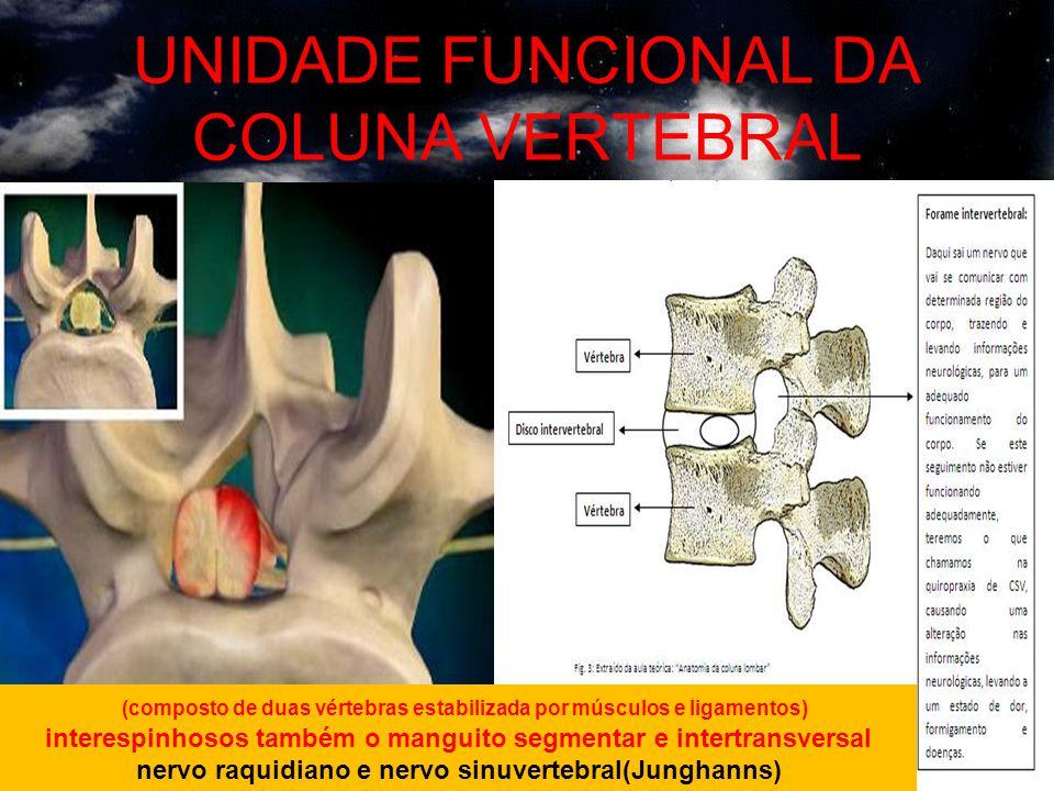 UNIDADE FUNCIONAL DA COLUNA VERTEBRAL (composto de duas vértebras estabilizada por músculos e ligamentos) interespinhosos também o manguito segmentar e intertransversal nervo raquidiano e nervo sinuvertebral(Junghanns)