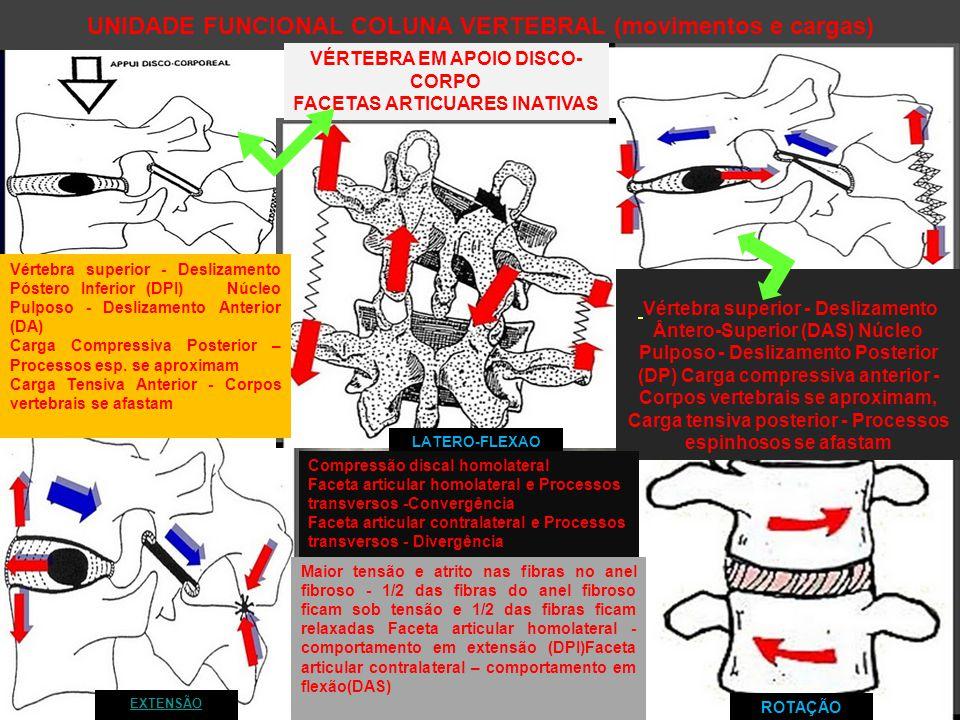 UNIDADE FUNCIONAL COLUNA VERTEBRAL (movimentos e cargas) VÉRTEBRA EM APOIO DISCO- CORPO FACETAS ARTICUARES INATIVAS Vértebra superior - Deslizamento Ântero-Superior (DAS) Núcleo Pulposo - Deslizamento Posterior (DP) Carga compressiva anterior - Corpos vertebrais se aproximam, Carga tensiva posterior - Processos espinhosos se afastam EXTENSÃO Vértebra superior - Deslizamento Póstero Inferior (DPI) Núcleo Pulposo - Deslizamento Anterior (DA) Carga Compressiva Posterior – Processos esp.