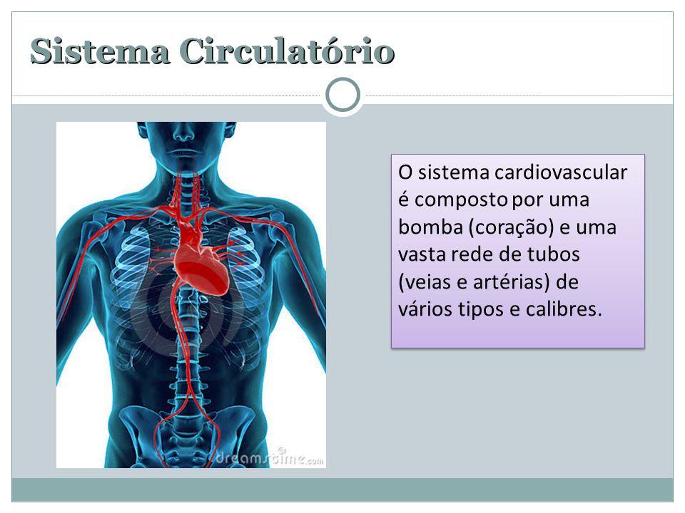 Sistema Circulatório O sistema cardiovascular é composto por uma bomba (coração) e uma vasta rede de tubos (veias e artérias) de vários tipos e calibr