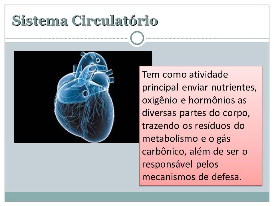 Sistema Circulatório Tem como atividade principal enviar nutrientes, oxigênio e hormônios as diversas partes do corpo, trazendo os resíduos do metabol