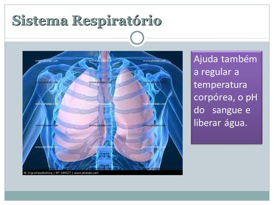 Sistema Respiratório Ajuda também a regular a temperatura corpórea, o pH do sangue e liberar água. Ajuda também a regular a temperatura corpórea, o pH