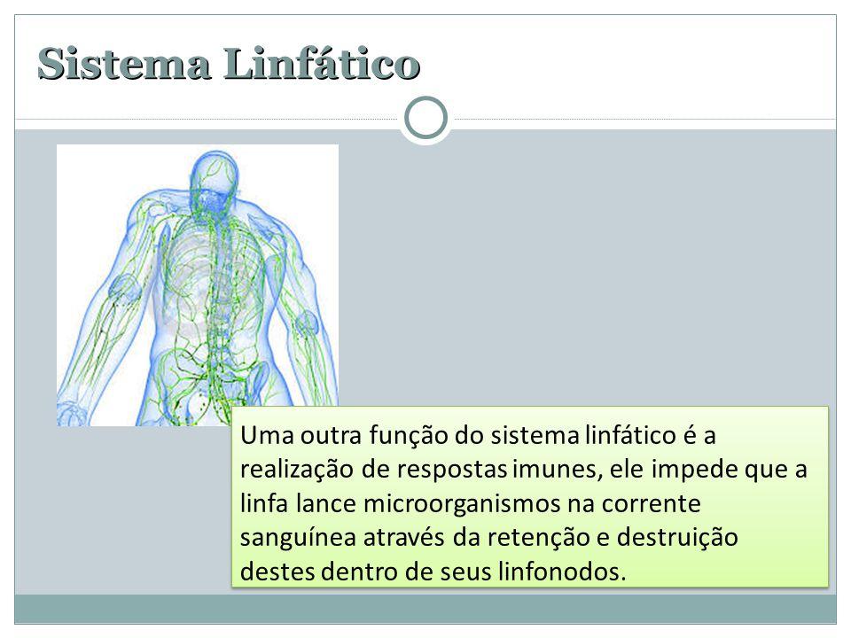 Sistema Linfático Uma outra função do sistema linfático é a realização de respostas imunes, ele impede que a linfa lance microorganismos na corrente s