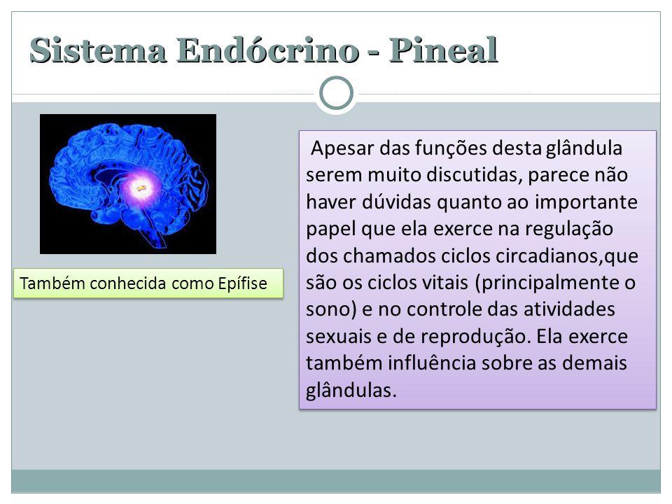 Sistema Endócrino - Pineal Apesar das funções desta glândula serem muito discutidas, parece não haver dúvidas quanto ao importante papel que ela exerc