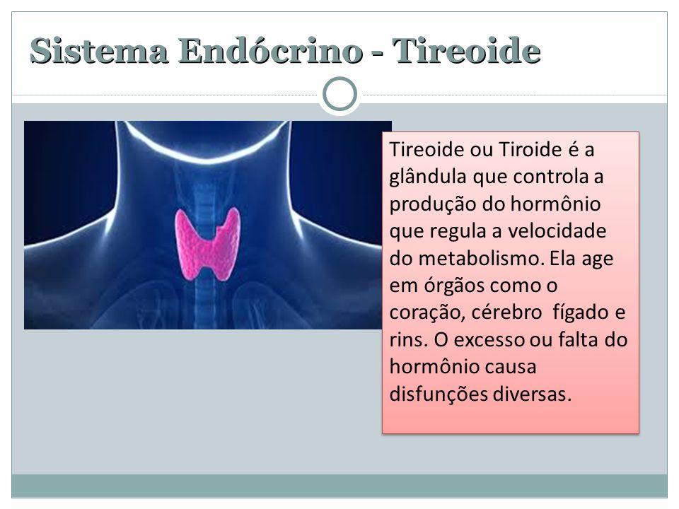 Sistema Endócrino - Tireoide Tireoide ou Tiroide é a glândula que controla a produção do hormônio que regula a velocidade do metabolismo. Ela age em ó
