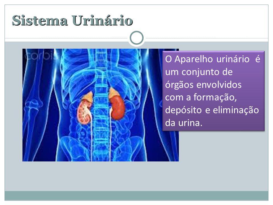 Sistema Urinário O Aparelho urinário é um conjunto de órgãos envolvidos com a formação, depósito e eliminação da urina.