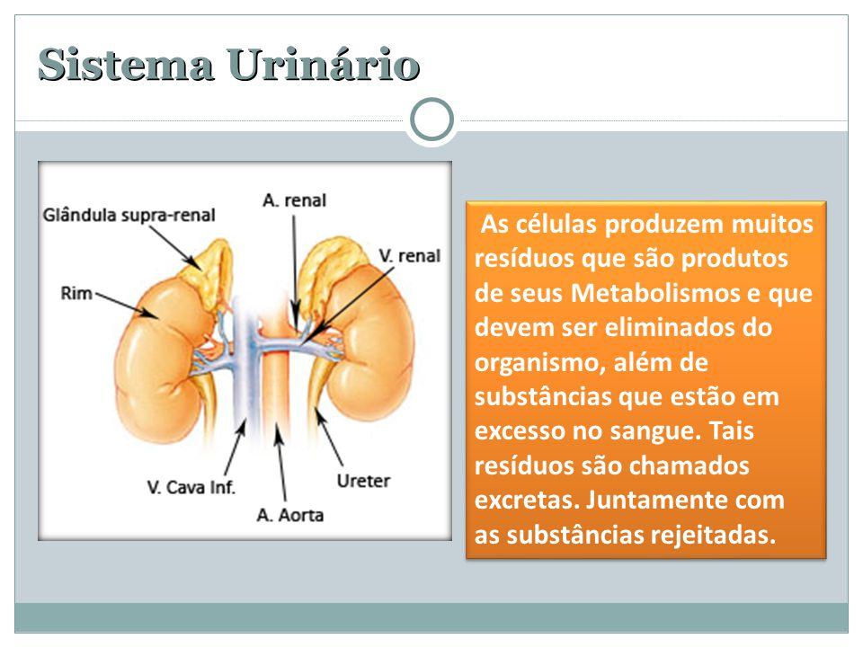 Sistema Urinário As células produzem muitos resíduos que são produtos de seus Metabolismos e que devem ser eliminados do organismo, além de substância