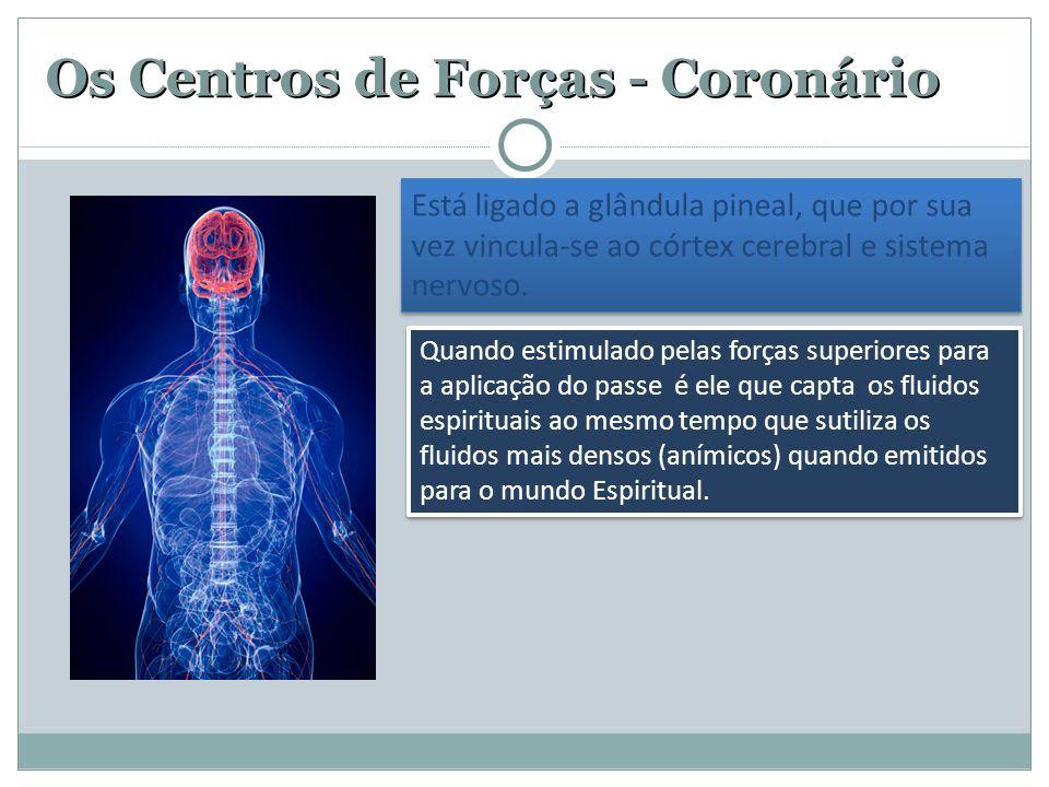 Os Centros de Forças - Coronário Está ligado a glândula pineal, que por sua vez vincula-se ao córtex cerebral e sistema nervoso. Quando estimulado pel