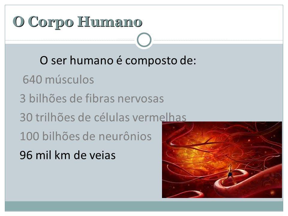 O Corpo Humano O ser humano é composto de: 640 músculos 3 bilhões de fibras nervosas 30 trilhões de células vermelhas 100 bilhões de neurônios 96 mil