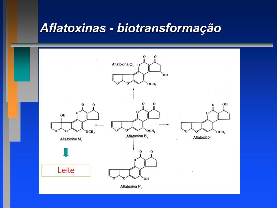 Aflatoxinas - biotransformação Leite