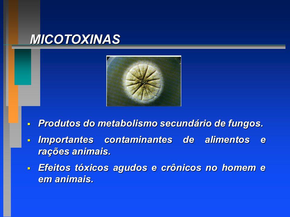 MICOTOXINAS  Produtos do metabolismo secundário de fungos.  Importantes contaminantes de alimentos e rações animais.  Efeitos tóxicos agudos e crôn
