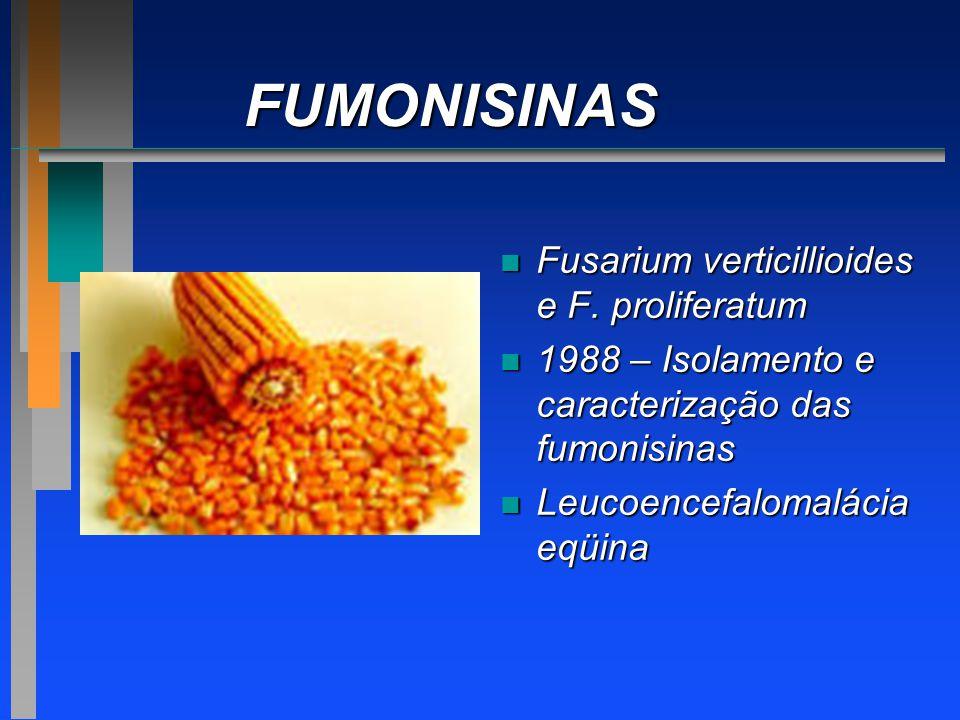 FUMONISINAS n Fusarium verticillioides e F. proliferatum n 1988 – Isolamento e caracterização das fumonisinas n Leucoencefalomalácia eqüina