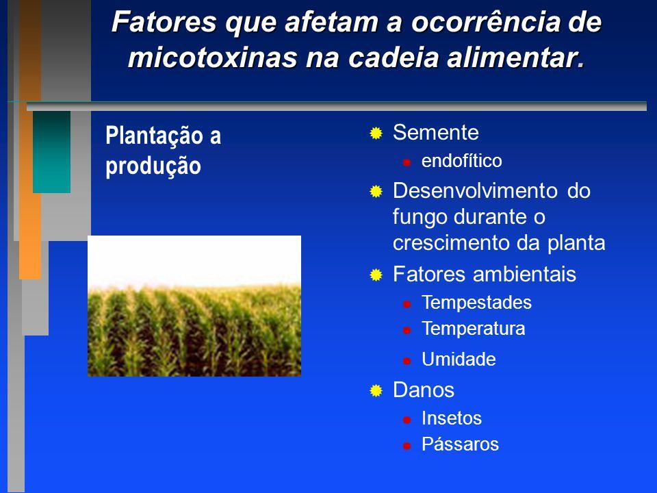 Fatores que afetam a ocorrência de micotoxinas na cadeia alimentar. Plantação a produção   Semente   endofítico   Desenvolvimento do fungo duran