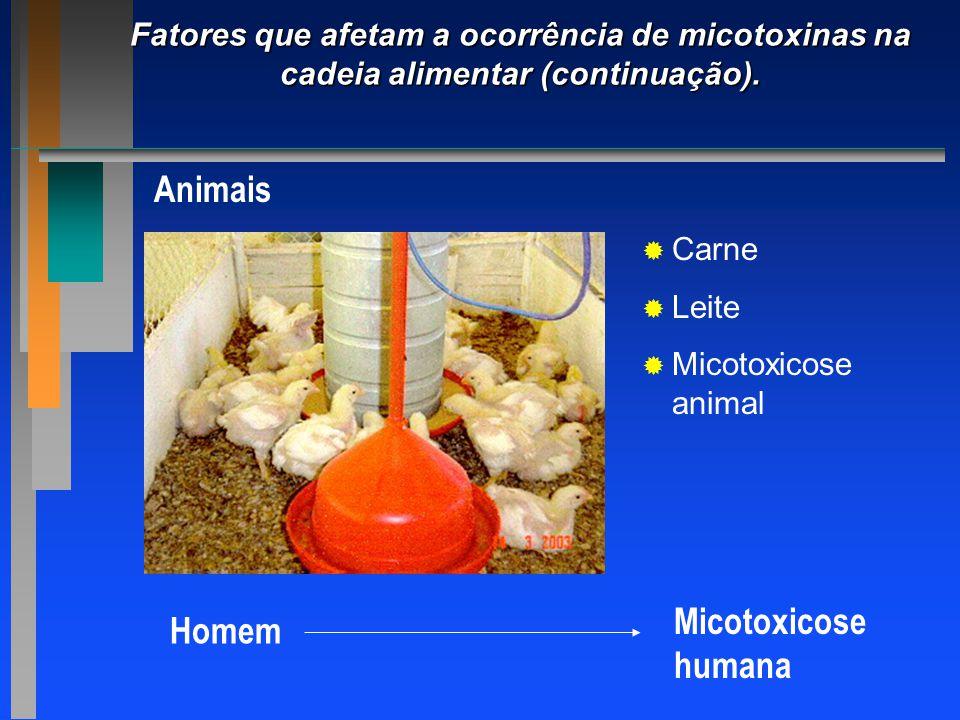 Fatores que afetam a ocorrência de micotoxinas na cadeia alimentar (continuação). Animais   Carne   Leite   Micotoxicose animal Homem Micotoxico