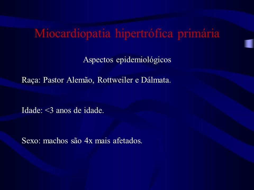 Miocardiopatia hipertrófica primária Aspectos epidemiológicos Raça: Pastor Alemão, Rottweiler e Dálmata.
