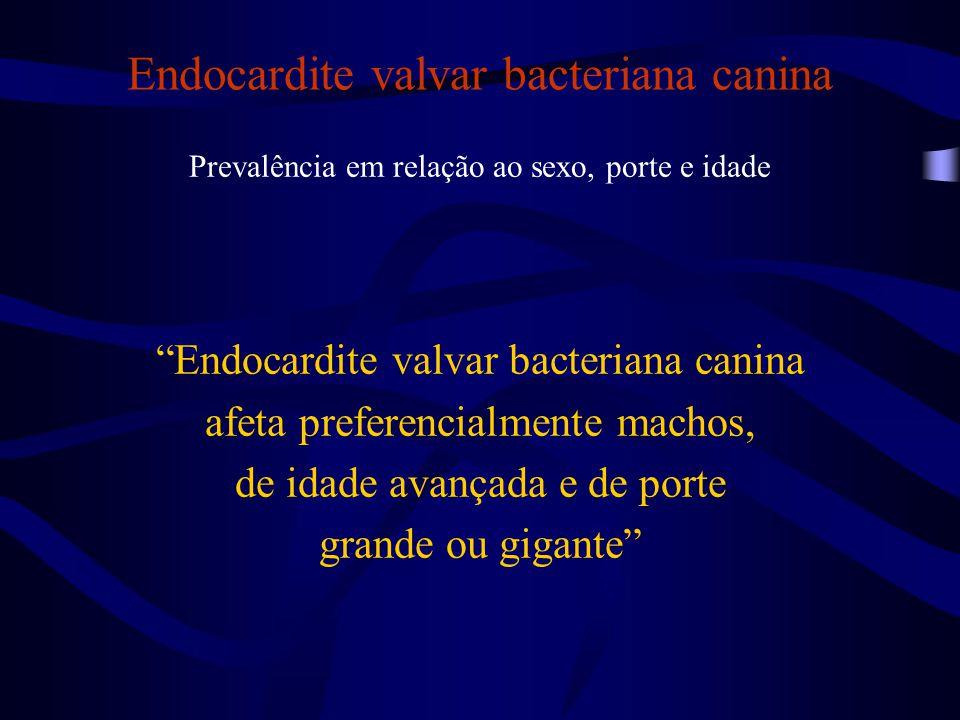 Endocardite valvar bacteriana canina Prevalência em relação ao sexo, porte e idade Endocardite valvar bacteriana canina afeta preferencialmente machos, de idade avançada e de porte grande ou gigante