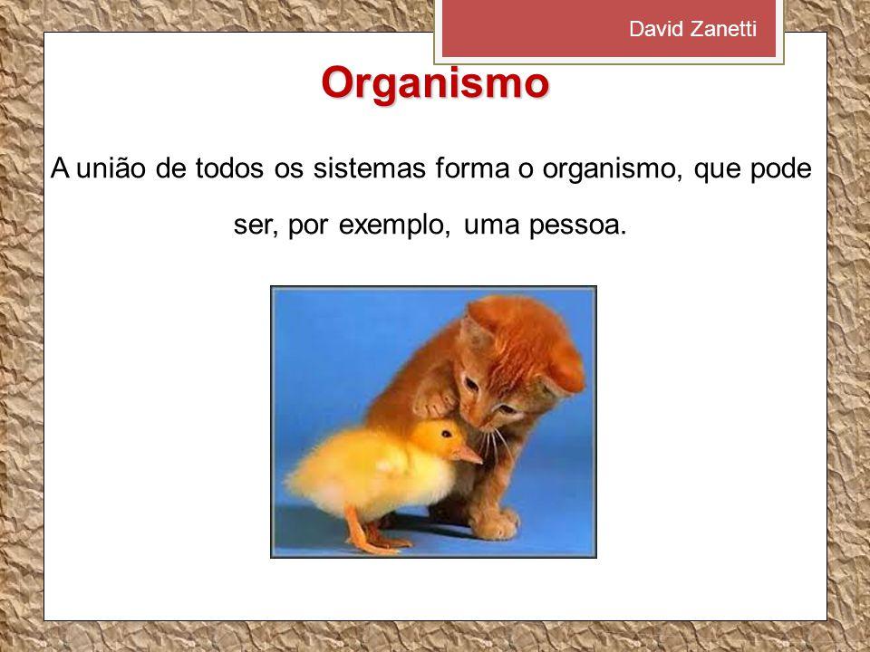Organismo A união de todos os sistemas forma o organismo, que pode ser, por exemplo, uma pessoa. David Zanetti