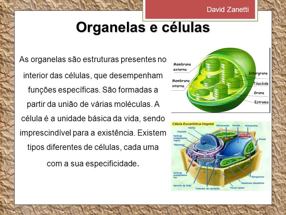 Organelas e células As organelas são estruturas presentes no interior das células, que desempenham funções específicas.