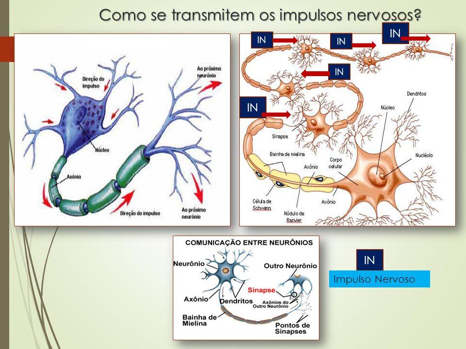 Como se transmitem os impulsos nervosos? IN Impulso Nervoso
