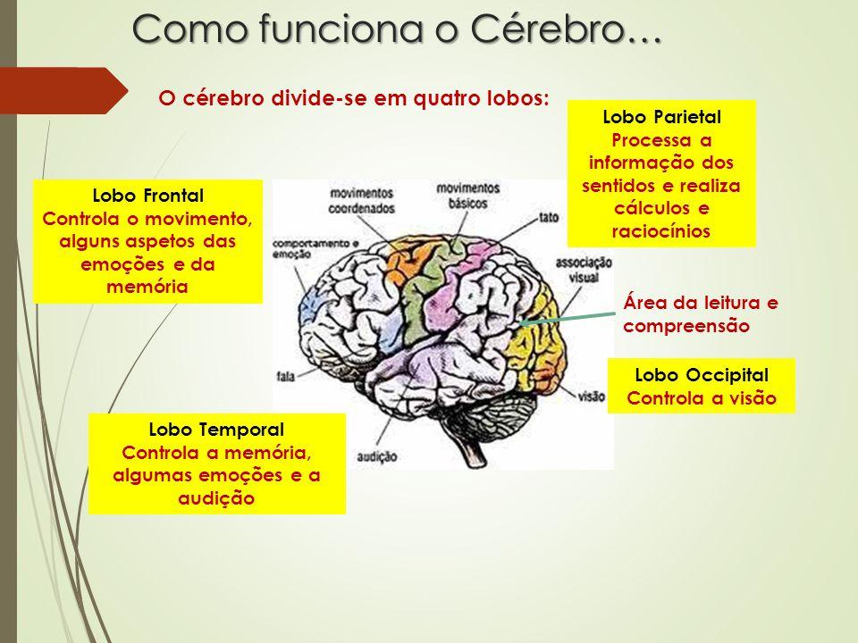 Como funciona o Cérebro… O cérebro divide-se em quatro lobos: Lobo Frontal Controla o movimento, alguns aspetos das emoções e da memória Lobo Temporal Controla a memória, algumas emoções e a audição Lobo Parietal Processa a informação dos sentidos e realiza cálculos e raciocínios Lobo Occipital Controla a visão Área da leitura e compreensão